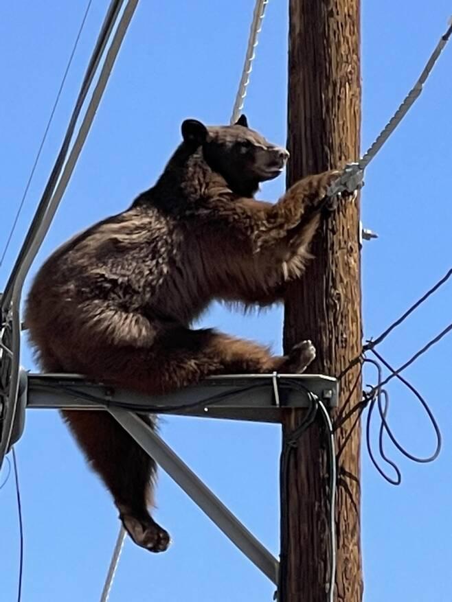 지난 9일 미국 애리조나주 시내 전봇대에 매달린 야생곰이 포착됐다. 시민들은 불안에 떨며 야생곰 구조작업을 지켜봤다. /사진=트위터 캡처