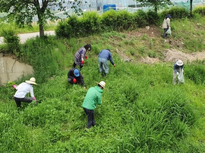 수원시가 민·관 합동으로 토종식물을 위협하는 생태계 교란 야생식물 퇴치에 나섰다. / 사진제공=수원시