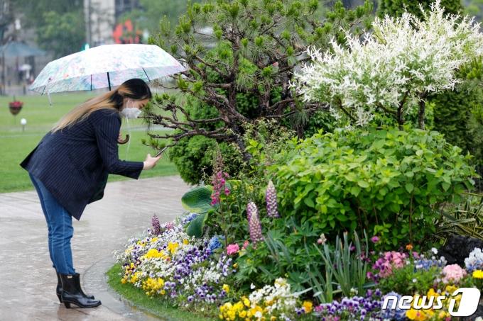 전국에 봄비가 내리는 4일 오후 서울광장에서 우산을 쓴 시민이 화사하게 핀 꽃을 스마트폰에 담고 있다. 2021.5.4/뉴스1 © News1 안은나 기자
