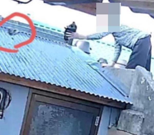 길고양이 사체를 이웃집 지붕에 던진 80대가 입건돼 조사를 받고 있다./ 사진=페이스북 캡처