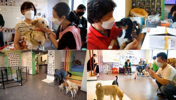 서울시 동대문구 '발라당 입양카페'에서 시민들이 유기동물을 만나고 있는 모습.(서울시 제공)© 뉴스1