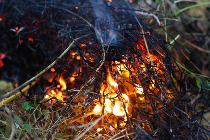산책로 인근 갈대숲에 두 차례 불을 지른 60대 남성이 집행유예를 선고 받았다. /사진=뉴스1