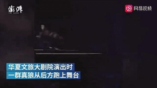중국의 한 공연장에서 늑대 수십 마리가 나타나 객석으로 돌진하는 등 생생한 퍼포먼스를 보여줬다. (웨이보 갈무리) © 뉴스1