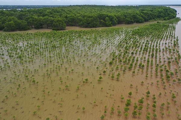 SK이노베이션이 베트남 현지 숲에서 묘목 심기 활동을 시작했다. 사진은 SK이노베이션이 복원한 맹그로브 숲. /사진=SK이노베이션