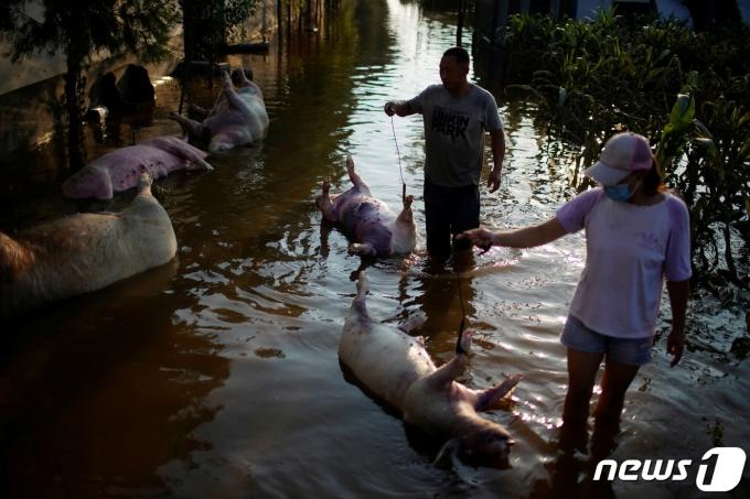 지난주 중국 허난성에서 발생한 홍수로 100만마리 이상의 가축이 폐사했다. © 로이터=뉴스1 © News1 원태성 기자