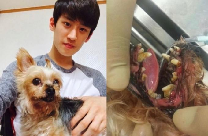 최근 온라인에 공개된 이대훈 선수와 반려견 해피의 사진. (온라인 커뮤니티 갈무리) © 뉴스1