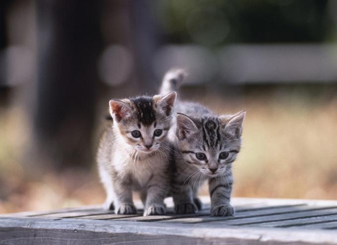 고양이를 입양인이 고양이를 학대한 후 살해했을 가능성이 제기된다는 글에 누리꾼들이 공분하고 있다. 사진은 기사와 무관함. /사진=이미지투데이