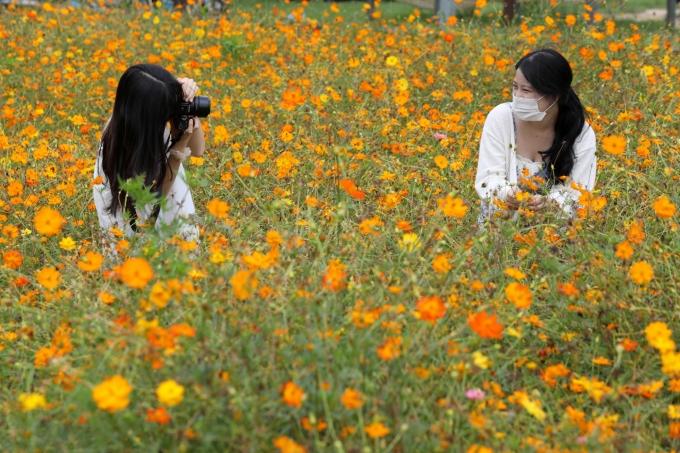 월요일은 전국이 일교차가 큰 가을 날씨가 이어진다. 시민들이 서울 양천구 안양천 생태공원에서 황화 코스모스를 배경으로 사진을 찍고 있는 모습. /사진=뉴시스