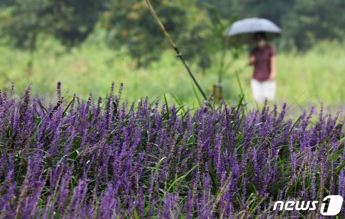 2021.9.7/뉴스1 © News1 김영운 기자