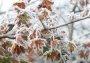 [오늘 날씨] 절기 '상강'에 일교차 15도… 쌀쌀한 내륙 일부 서리·얼음