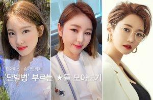 트와이스·송가인까지…'단발병' 부르는 ★들 모아보기