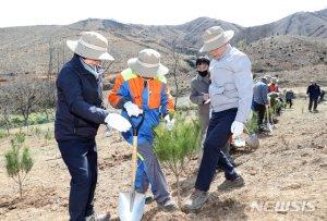 문 대통령, 강원도 산불피해지에 '금강소나무' 심어…산림 복구계획은?